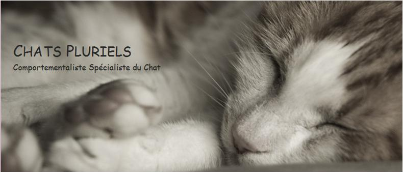 Chats Pluriels - Comportementaliste spécialiste de la relation Homme - Chat sur Paris, Ile de France, Oise